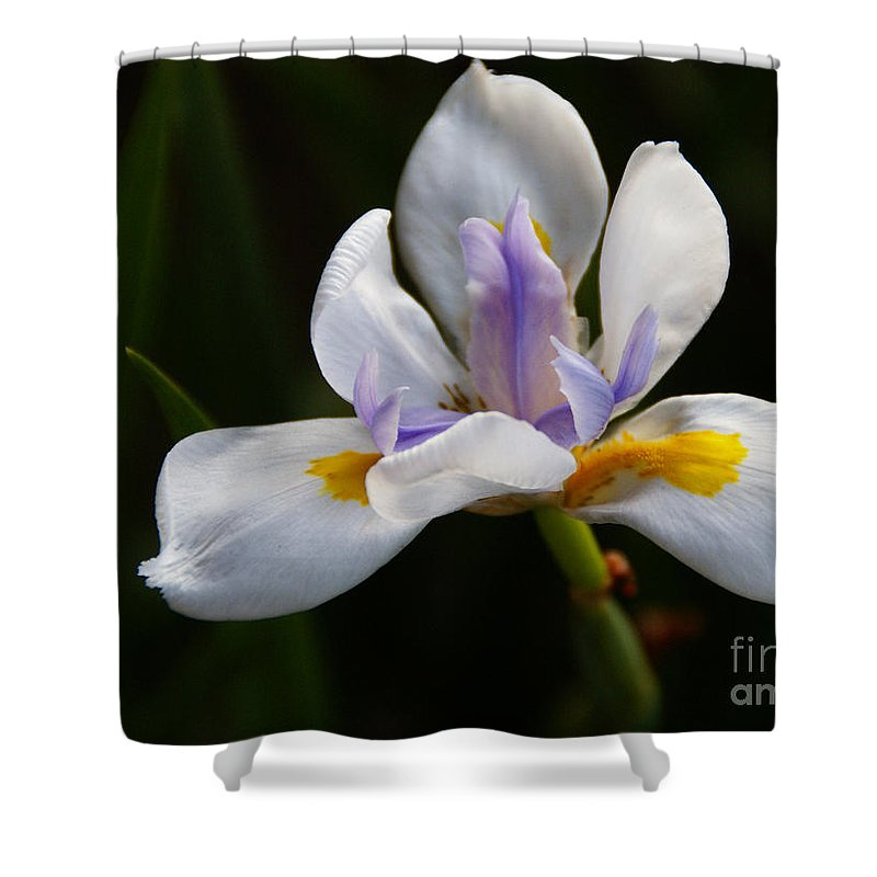 Flower Shower Curtain featuring the photograph The Beckoning by Linda Shafer