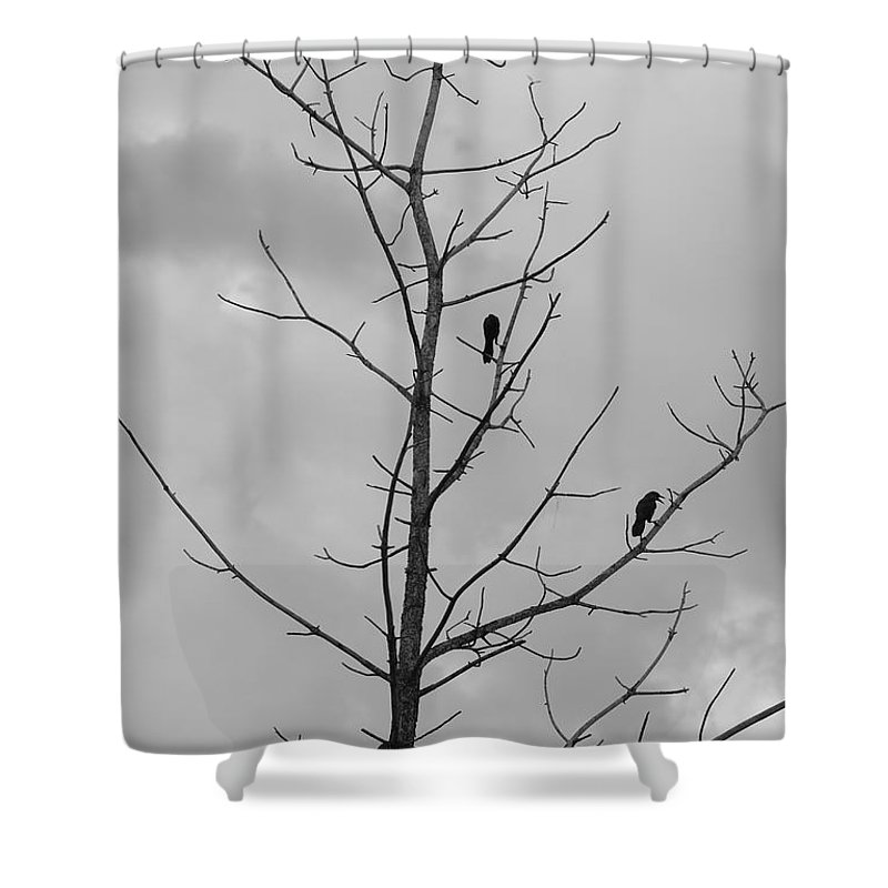 Tree Shower Curtain featuring the photograph The Birds by Rob Hans