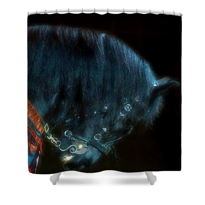 Horse Shower Curtain featuring the photograph The Black Horse Iv by Amanda Struz