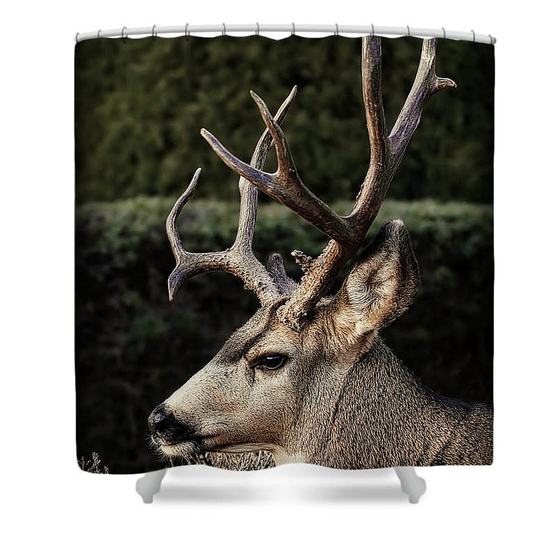 The Buck Shower Curtain Featuring Photograph Profile By Ernie Echols