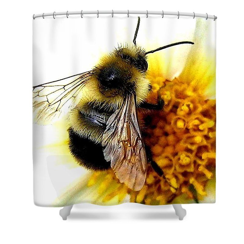 Honeybee Shower Curtain featuring the photograph The Buzz by Will Borden