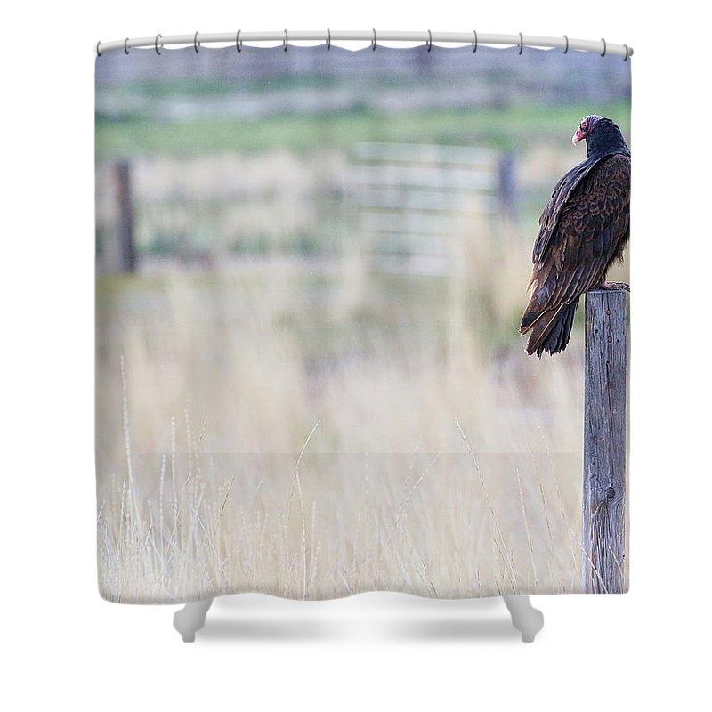 Buzzard Shower Curtain featuring the photograph The Buzzard by Steve McKinzie