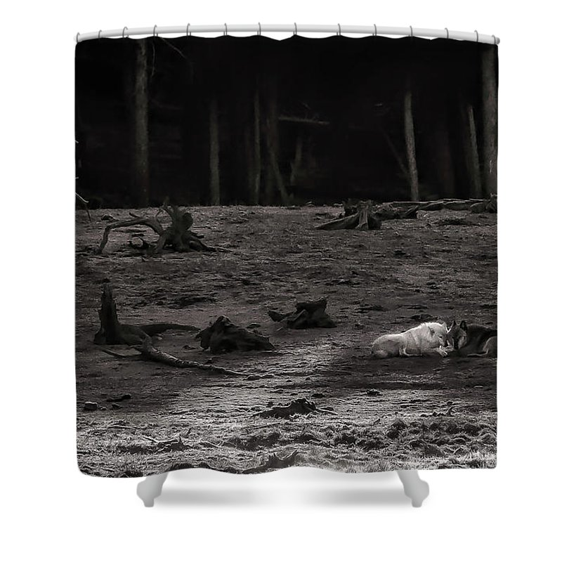 Yellowstone Shower Curtains