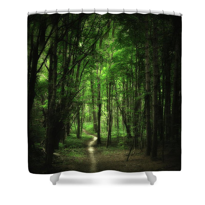 Forest Shower Curtain featuring the photograph The Cathedral Arch by Andrea Kollo