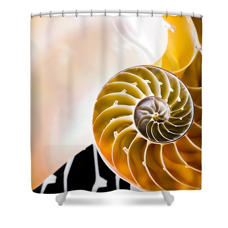 Nautilus Shower Curtain featuring the photograph The Chambered Nautilus by Colleen Kammerer