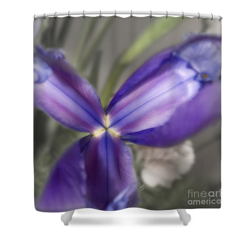 Blue Shower Curtain featuring the photograph The Color Of January 2 by Cindy Garber Iverson