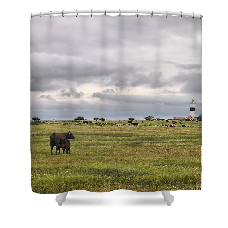 Lehtokukka Shower Curtain featuring the photograph The Cows Of Ottenby 1 by Jouko Lehto