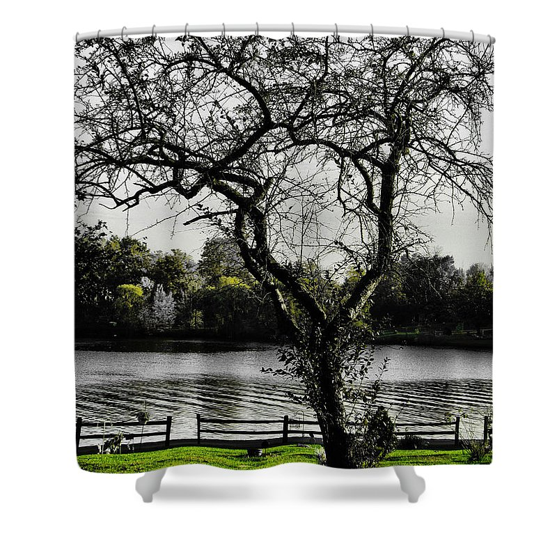 Tree Shower Curtain featuring the photograph The Crow by September Stone