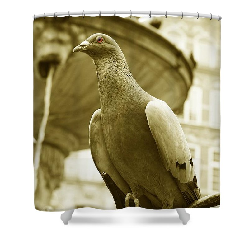 Dove Fountain Water Bird Birds White Gray Sepia Eye Architecture Water City Danzig Old Shower Curtain featuring the photograph The Dove by Steve K