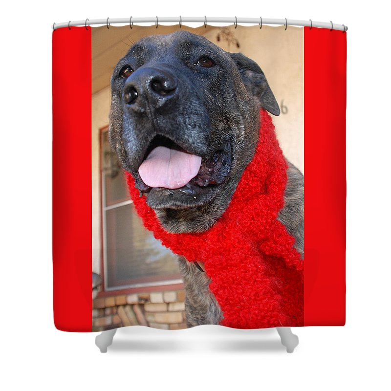 Dog Shower Curtain featuring the photograph The Dude by JOANNE McCubrey