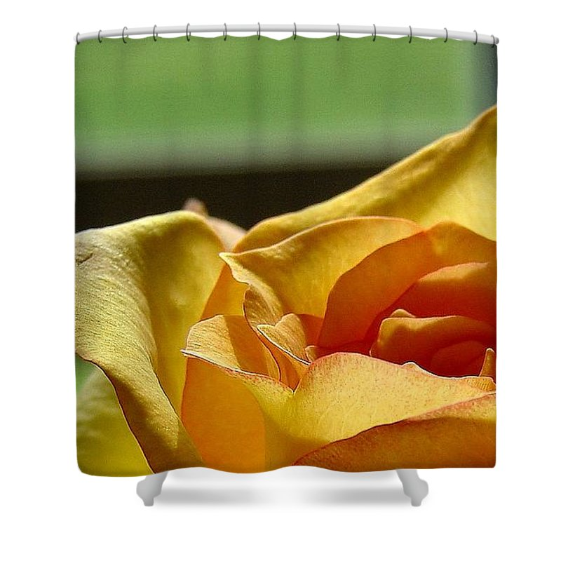 Rose Yellow Shower Curtain featuring the photograph The Edge Of Yellow by Luciana Seymour