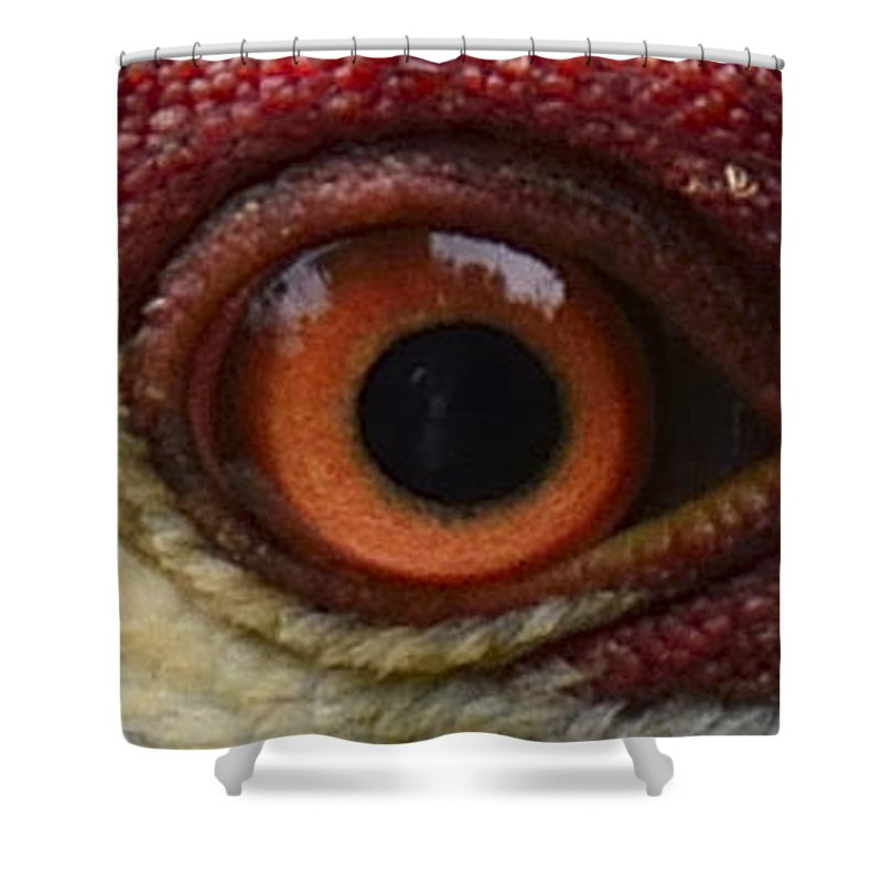 Eye Shower Curtain featuring the photograph The Eye Of The Crane by William Burgess
