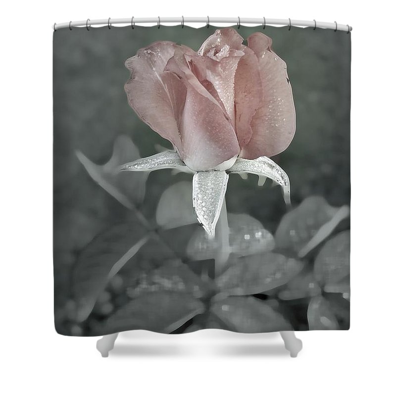 Rose Shower Curtain featuring the digital art The Faded Rose by Robert Meanor