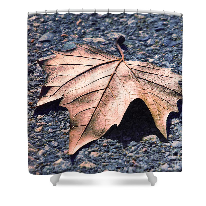 Leaf Shower Curtain featuring the photograph The Fallen by Tara Turner