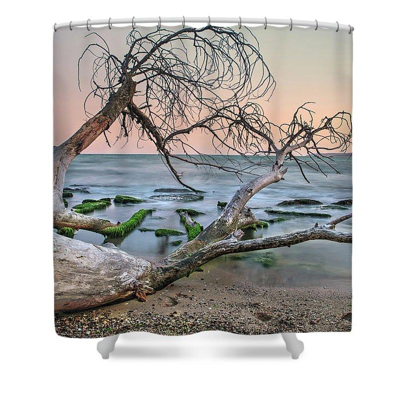 пейзаж Shower Curtain featuring the photograph The Fallen Tree by Tihomir Dimitrov