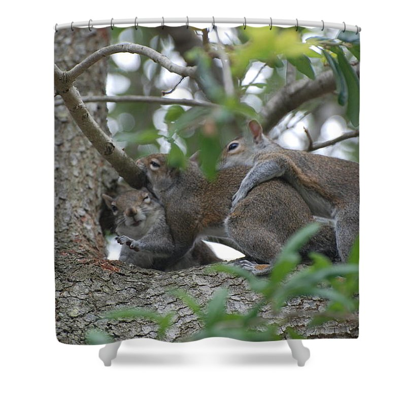 Squirrels Shower Curtain featuring the photograph The Fight For Life by Rob Hans