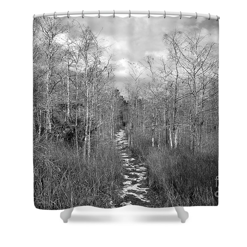 Everglades Shower Curtain featuring the photograph The Florida Trail by David Lee Thompson