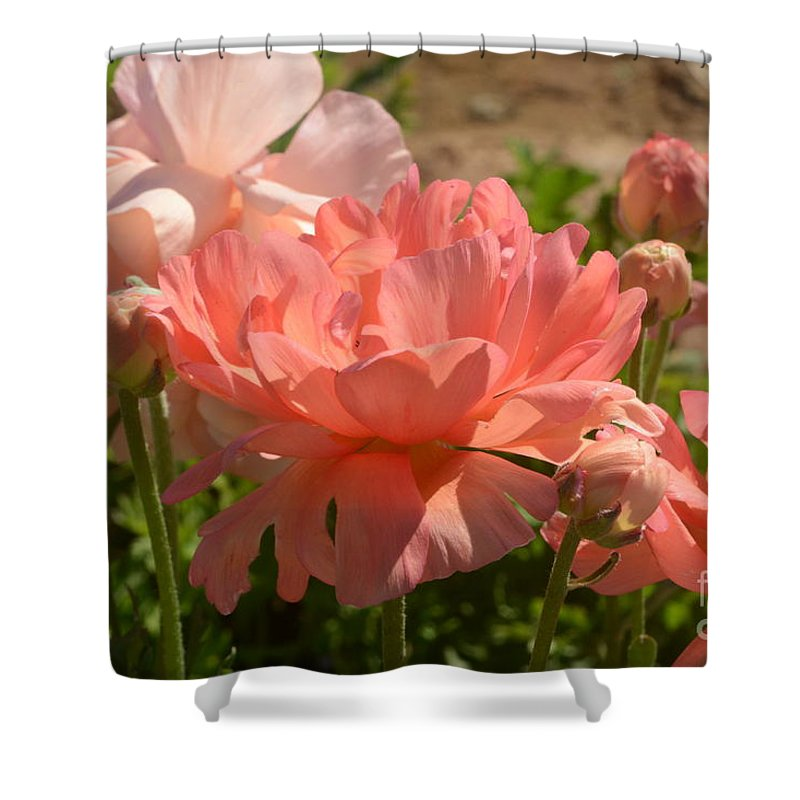 The Flower Fields At Carlsbad Shower Curtain featuring the photograph The Flower Field Season by Luv Photography