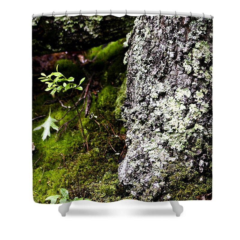 Moss Shower Curtain featuring the photograph The Forest Floor Bluestone State Park West Virginia by Teresa Mucha