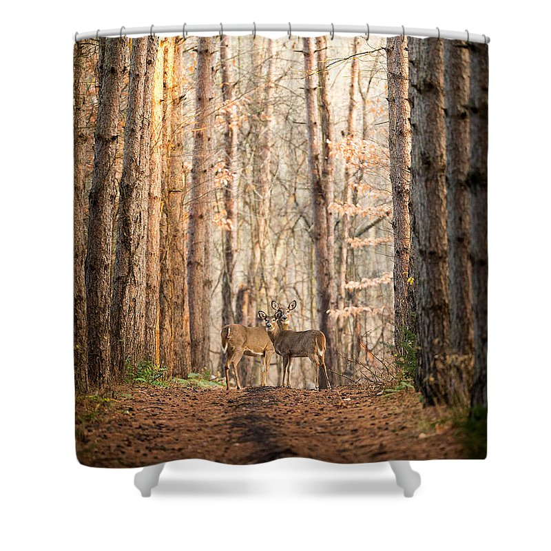 Deer Shower Curtain featuring the photograph The Gift by Everet Regal
