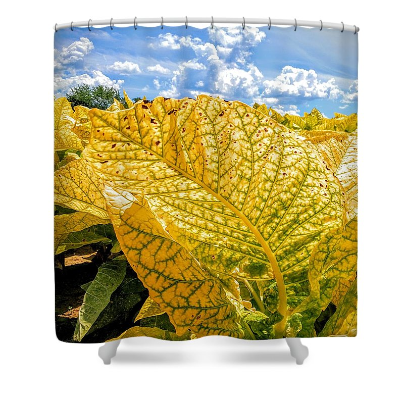 Leaf Shower Curtain featuring the photograph The Golden Leaf by Paul Kercher