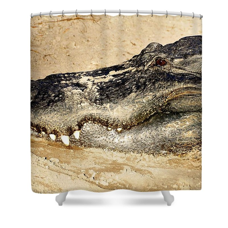 Alligator Shower Curtain featuring the photograph The Great Alligator by David Lee Thompson