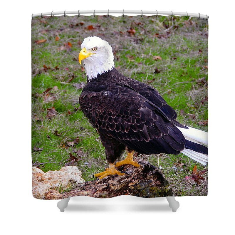Bald Eagle Shower Curtain featuring the photograph The Great Bald Eagle by David Lee Thompson