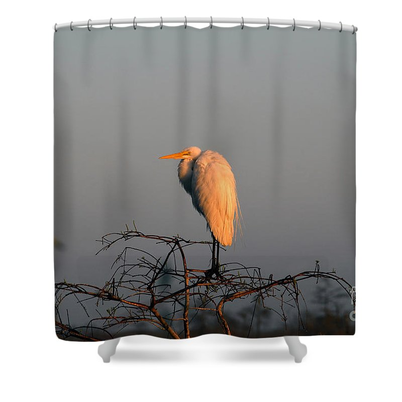 Egret Shower Curtain featuring the photograph The Great Egret by David Lee Thompson