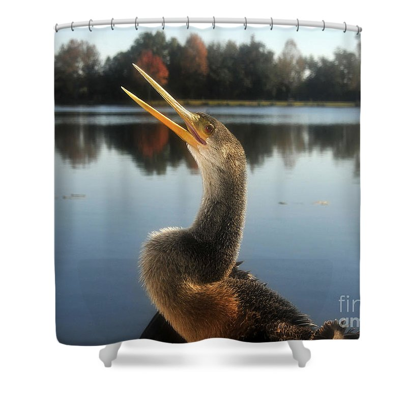 Golden Crested Anhinga Shower Curtain featuring the photograph The Great Golden Crested Anhinga by David Lee Thompson