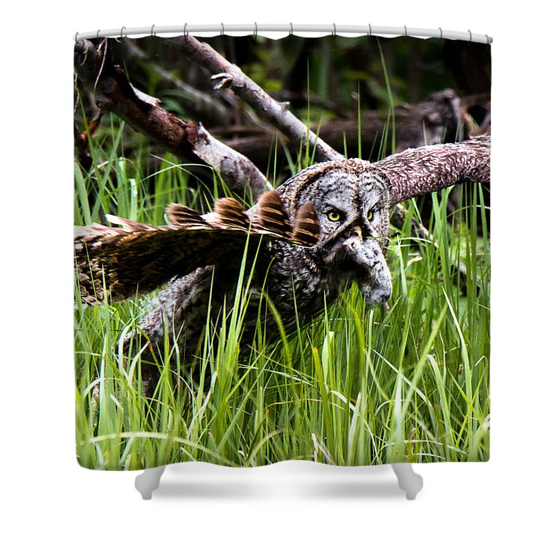Great Gray Shower Curtain featuring the photograph The Great Hunt by Ryan Smith