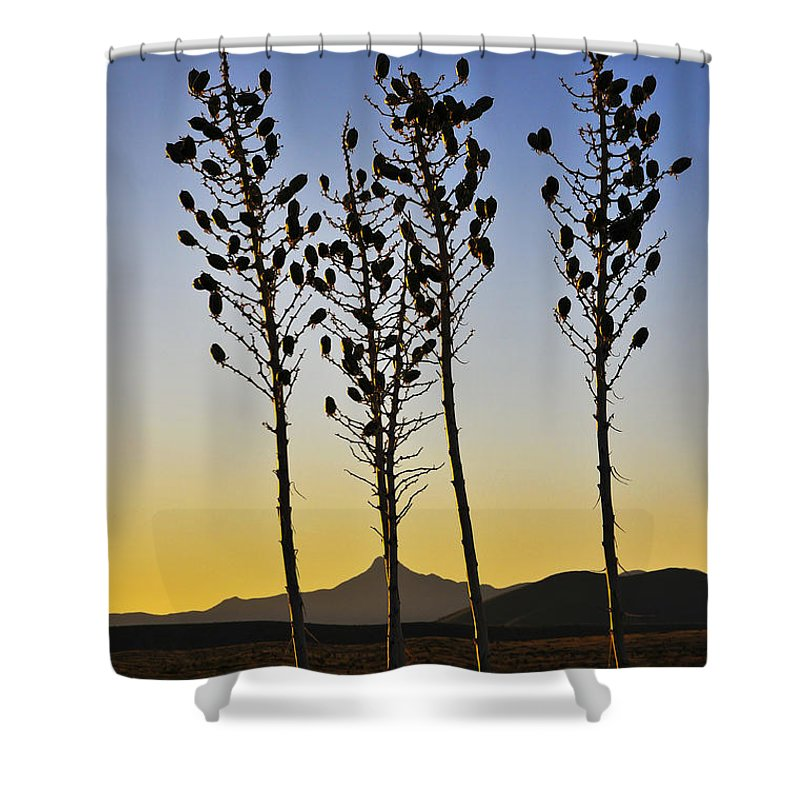 The Guild Shower Curtain featuring the photograph The Guild by Skip Hunt