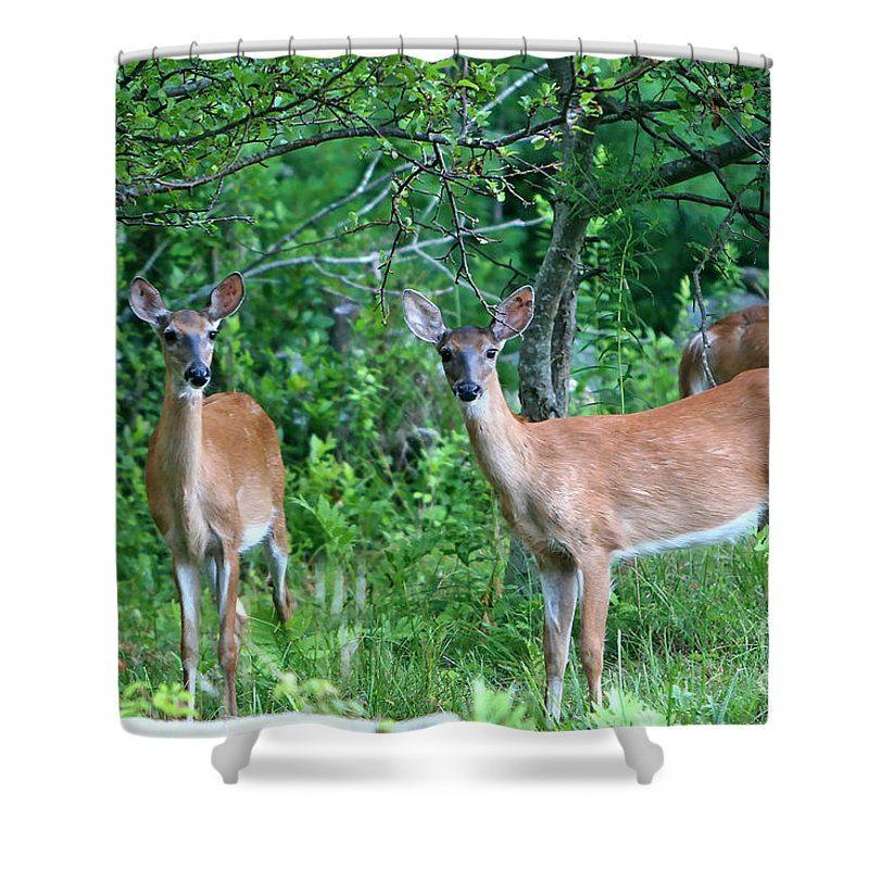 Deer Shower Curtain featuring the photograph The Herd by Marle Nopardi