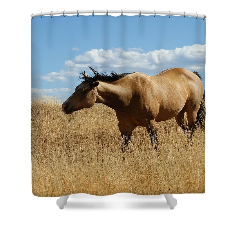 Horse Shower Curtain featuring the photograph The Horse by Ernie Echols