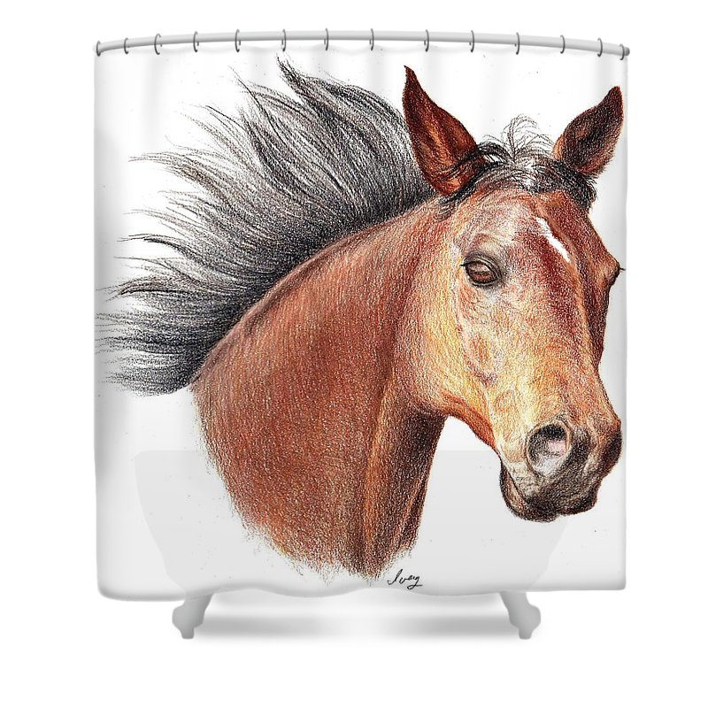 Portraits Shower Curtain featuring the drawing The Horse by Mike Ivey
