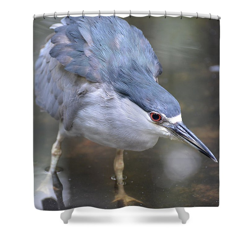Marsh Shower Curtain featuring the photograph The Hunt Is On by Erin O'Neal-Morie