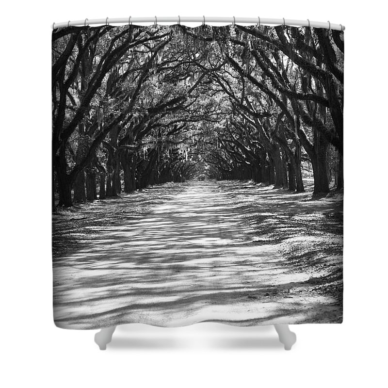 Georgia Shower Curtain featuring the photograph Live Oaks Lane With Shadows - Black And White by Carol Groenen