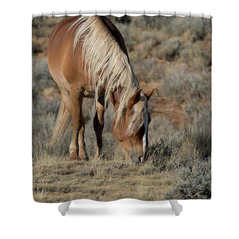 Cody Shower Curtain featuring the photograph The Joy of Nature by Frank Madia