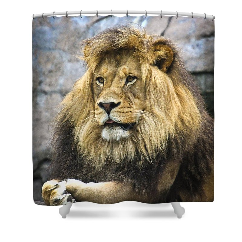 Big Cats Shower Curtain featuring the photograph The King by Steve McKinzie