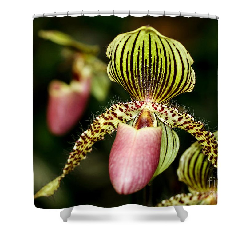 Landscape Shower Curtain featuring the photograph The Lady Slipper by Sabrina L Ryan