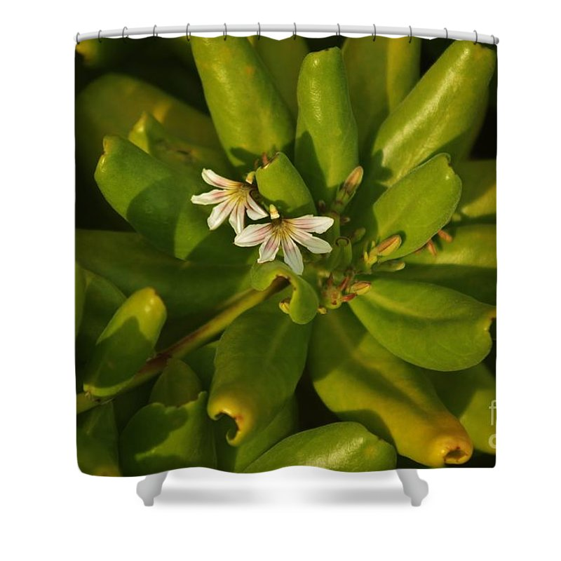 Beach Shower Curtain featuring the photograph The Legend Of Naupaka by Craig Wood