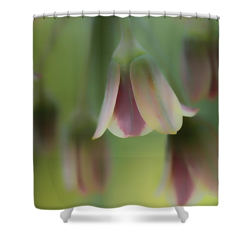 Connie Handscomb Shower Curtain featuring the photograph The Light Inside The Belfry by Connie Handscomb