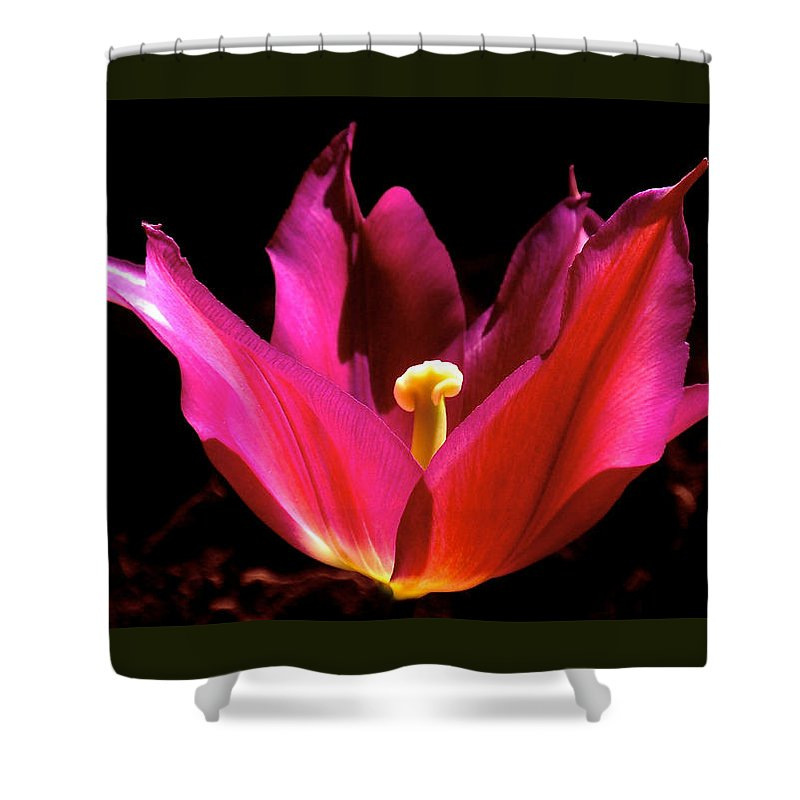 Tulip Shower Curtain featuring the photograph The Light Of Day by Rona Black
