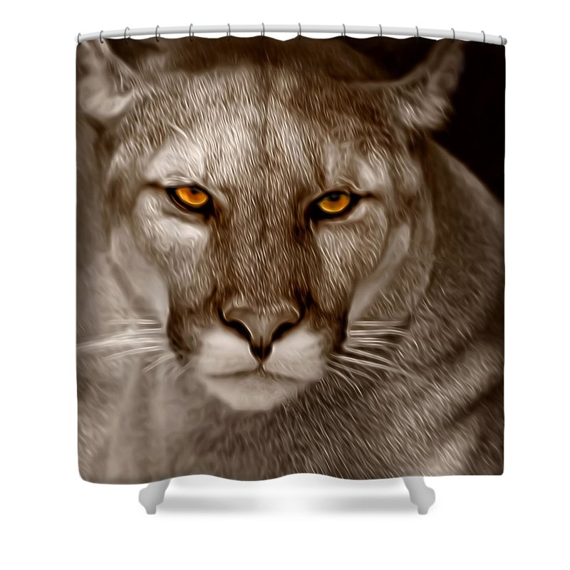 Florida Shower Curtain featuring the photograph The Look - Florida Panther by Mitch Spence