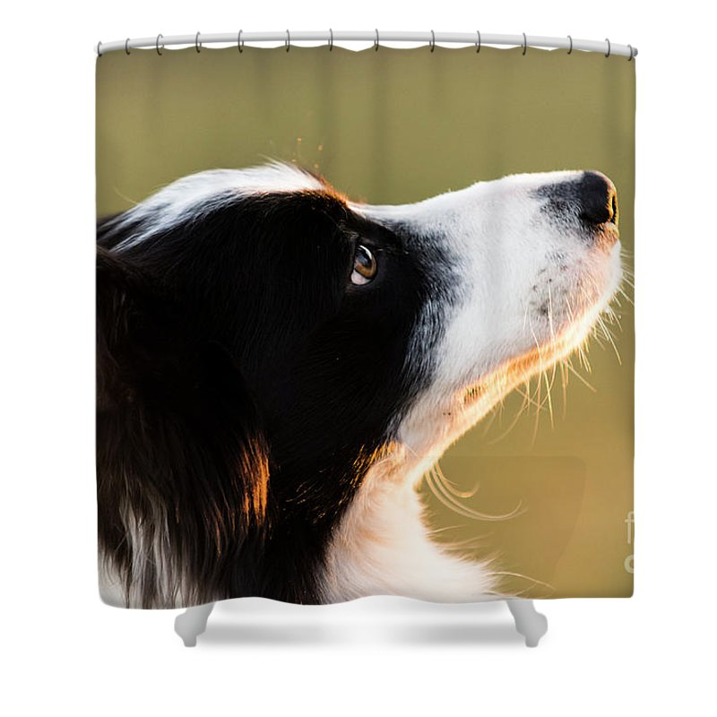 Alert Shower Curtain featuring the photograph The Look Of A Dog by Marco Siori