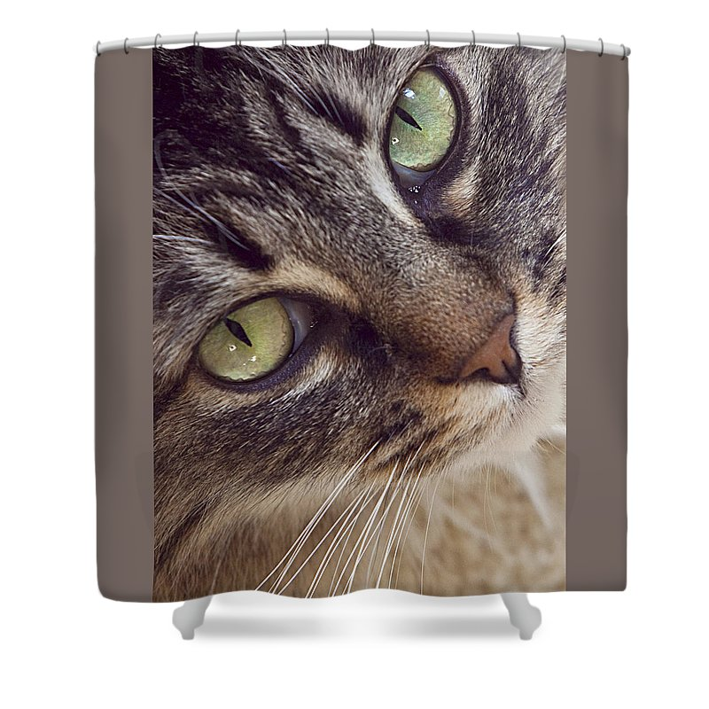 Cat Shower Curtain featuring the photograph The Look Of Love by Lynn Andrews