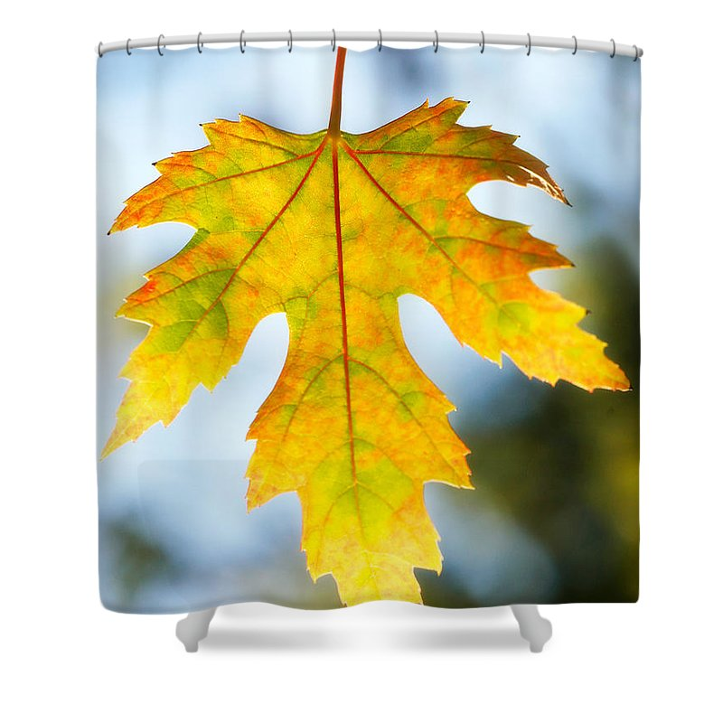 Maple Shower Curtain featuring the photograph The Maple Leaf by Marilyn Hunt