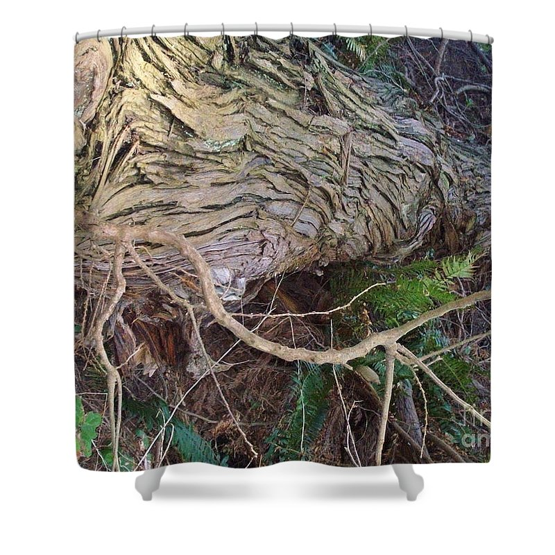 Tree Shower Curtain featuring the photograph The Mighty Has Fallen by Mary Mikawoz