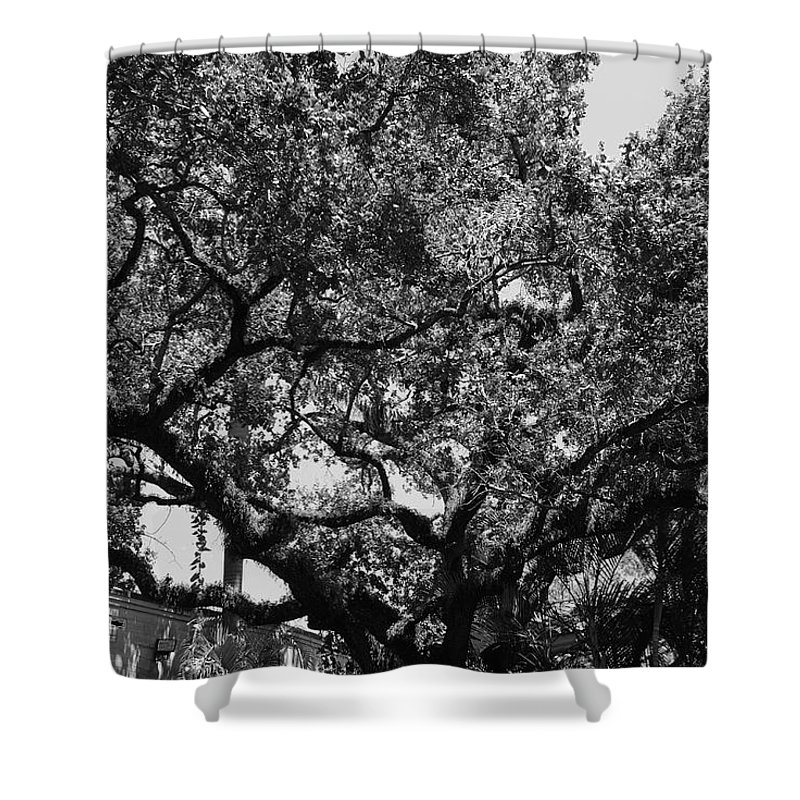 Black And White Shower Curtain featuring the photograph The Monastery Tree by Rob Hans