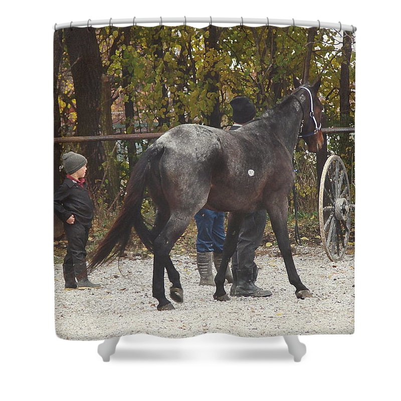 Angelandspot Shower Curtain featuring the photograph The New Horse by Cassie Peters