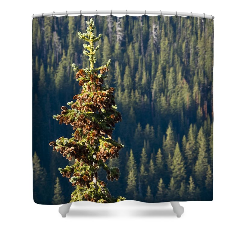 Trees Shower Curtain featuring the photograph The Next Generation by Albert Seger